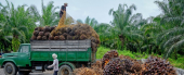 China And India Demand Boosts Palm Oil Price Despite Eu Pressure