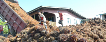 Palm Regional News - Indonesia Export Duty Up